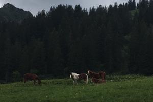 Pferd Jackomo Alm Lebenspuls 2