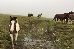 Pferd Jackomo Alm Lebenspuls 5
