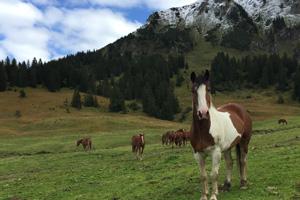 Pferd Jackomo Alm Lebenspuls 6