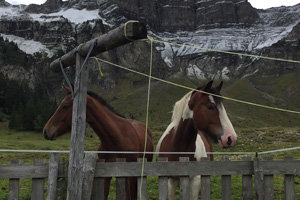 Pferd Jackomo Alm Lebenspuls 8