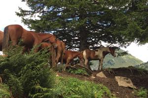 Pferd Jackomo Alm Lebenspuls 9