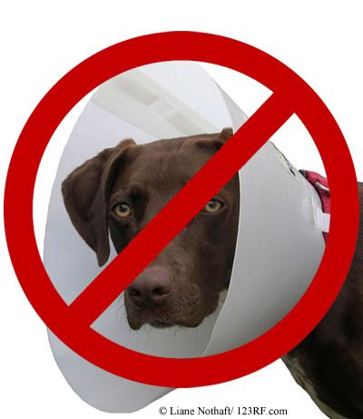 Halskrause Hund nein danke Beitrag LebensPuls