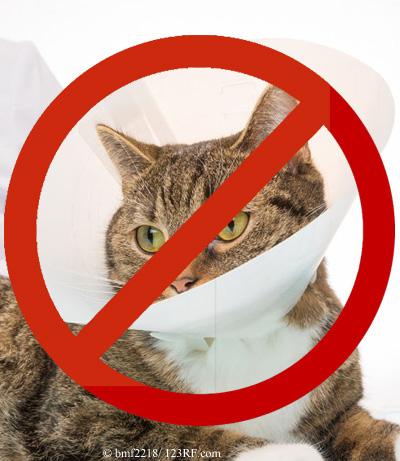 Halskrause Katze nein danke Beitrag LebensPuls