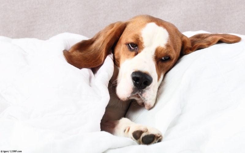 kranker Hund Beitrag LebensPuls