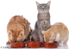 Katzen am Futternapf Futterautomat Trixie Beitrag LebensPuls