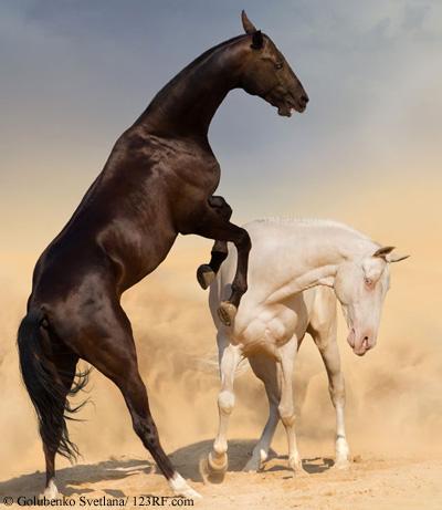 Pferde kämpfen Beitrag LebensPuls