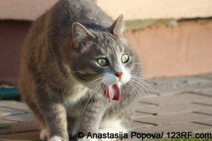 Katze erbricht Beitrag LebensPuls