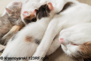 Katze mit Welpen Beitrag LebensPuls
