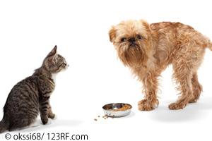 Katze und Hund vor Fressnapf Beitrag LebensPuls