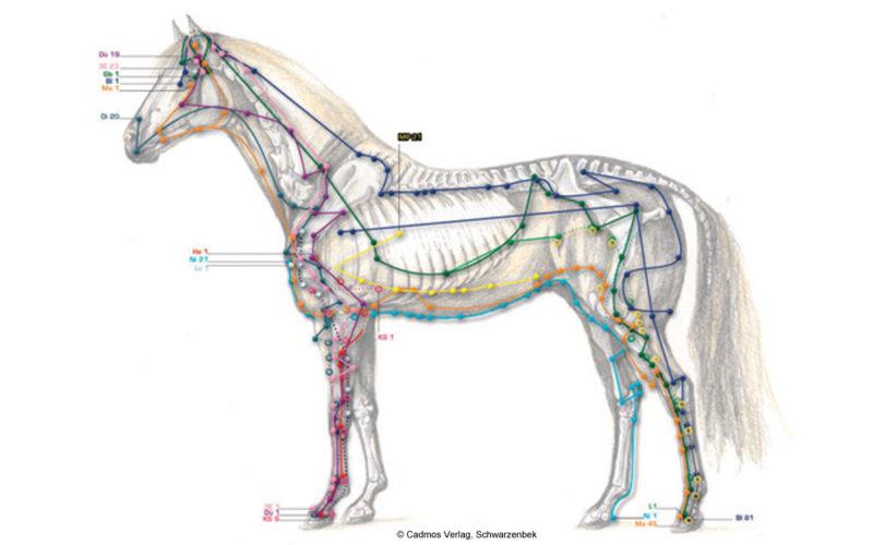 Meridiane beim Pferd Übersicht Beitrag LebensPuls