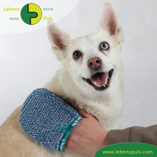 VetMedCare Tierbedarf Hund Katze Pferd Fellpflegehandschuh klein1
